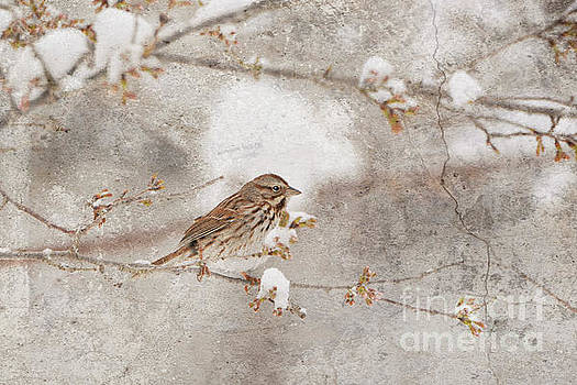 Little House Sparrow by Lila Fisher-Wenzel