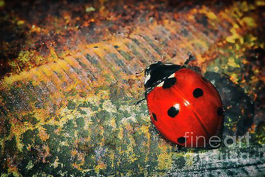 Little Ladybug by Kasia Bitner
