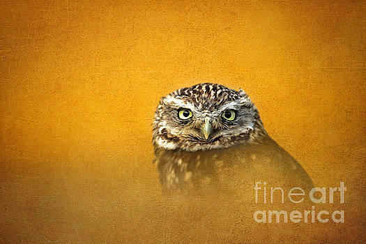 Little Owl by Lisa Cockrell