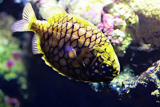 Little Pineapple Fish by Miroslava Jurcik