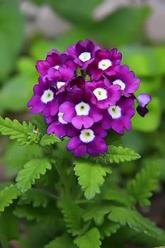 Little purple spots by Michal Batko