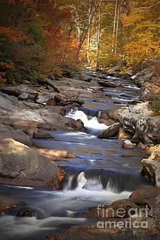Little River Stream by Geraldine DeBoer