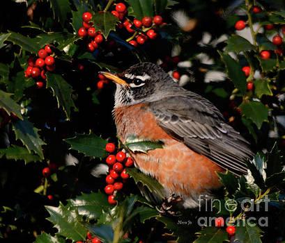 Little Robin by Nava Thompson