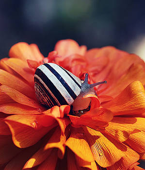 Little snail by Nataly Rubeo