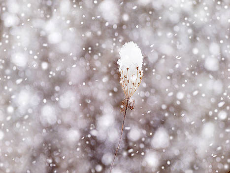 Little Snow Queen by Angie Rea