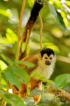 Little Squirrel Monkey by Natural Focal Point Photography