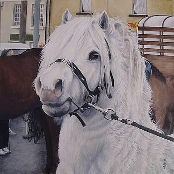 Little Stallion-Glin Fair by Pauline Sharp