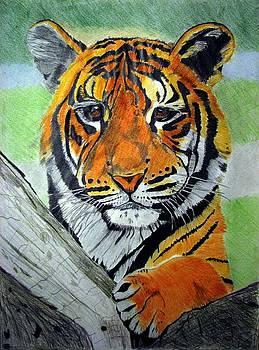 Little tiger by Melita Safran