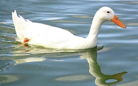 Martina Fagan - Little White Duck