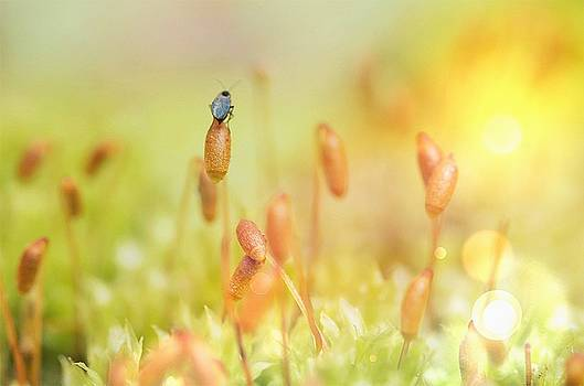 Little World by Nikki McInnes