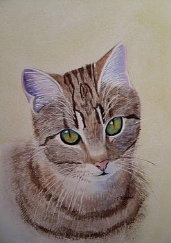 Little Zeke  Stray Cat Series One by Teresa Boston