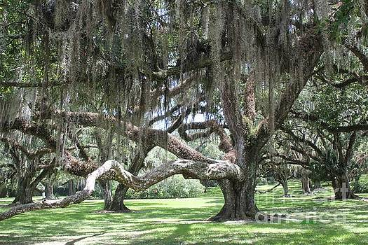 Live Oak Grove by Dodie Ulery