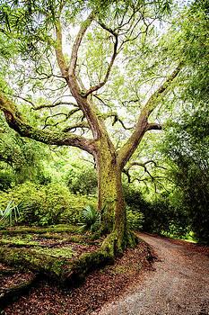Live Oak Magic by Scott Pellegrin