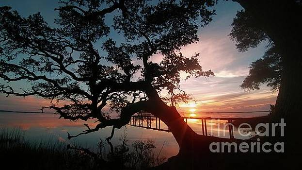 Live oak Sunrise by Benanne Stiens