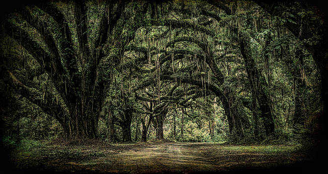 Live Oaks by Donnie Bagwell