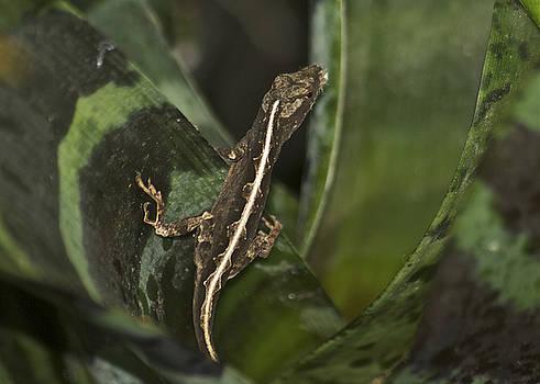 Michael Peychich - Lizard 2
