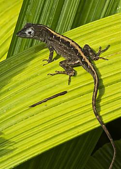 Michael Peychich - Lizard 4