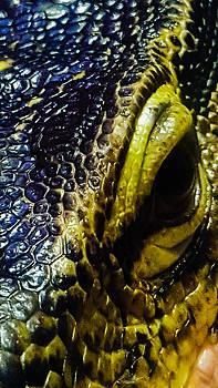 Lizard eye by Bruce Carpenter