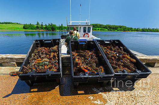 Lobster Catch of the Day by Verena Matthew