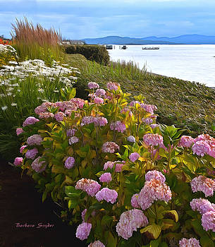 Lochside Waterfront Sidney British Columbia Canada Painting by Barbara Snyder