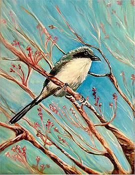 Loggerhead Shrike by Carol Allen Anfinsen