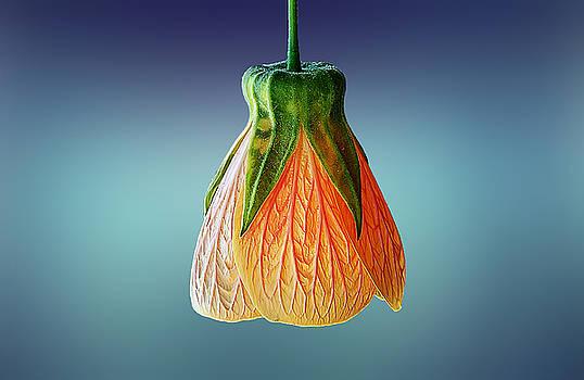 Loks like  a lamp by Bess Hamiti