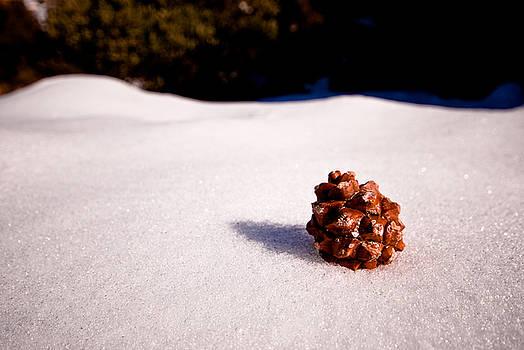 Lone Cone by Zee Helmick