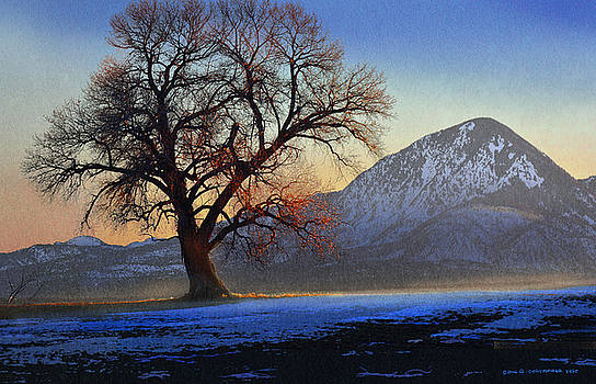 Lone Cottonwood Tree Ute Mountain by R christopher Vest