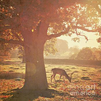 Lone Deer by Lyn Randle