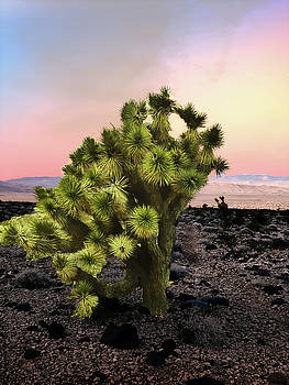 Lone Joshua Tree by Alan Socolik