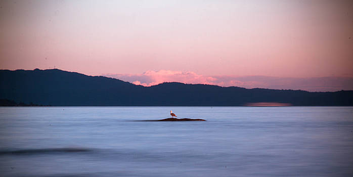 Lone Seagull by Danielle Silveira