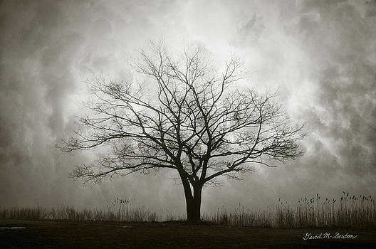 Dave Gordon - Lone Tree and Clouds