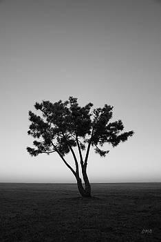 David Gordon - Lone Tree at Twilight BW