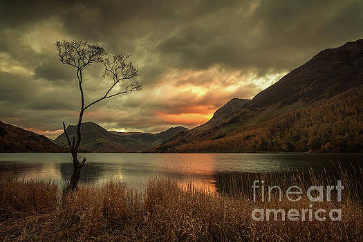 Lone Tree - Buttermere by Martin Williams