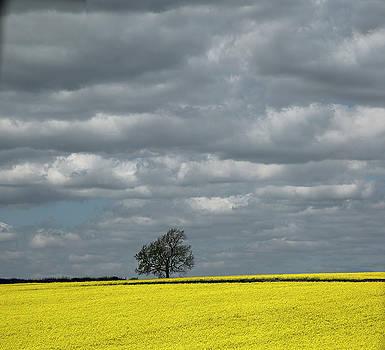 Lone Tree by Elvira Butler