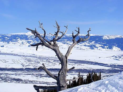 Lone Tree in the Mountain by Elena Tudor