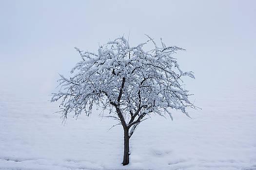 Lone Tree IN Winter by Steve Gadomski