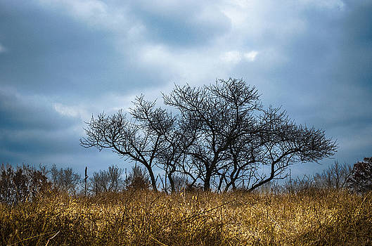 Lone Tree by Kelly Anderson