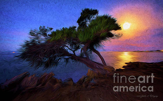 Lone Tree on Pacific Coast Highway at Moonset by John A Rodriguez