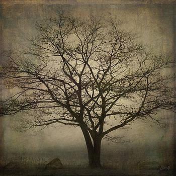 Lone Tree SQ by David Gordon