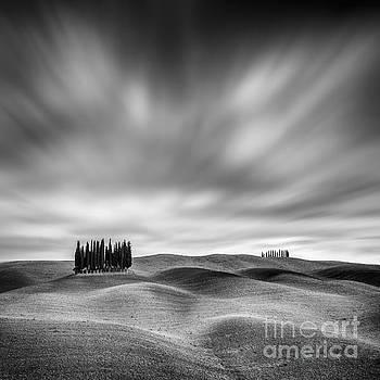Lonely Cypresses  by Pawel Klarecki