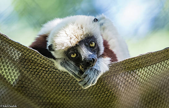 Lonely Lemur by Mike Ronnebeck
