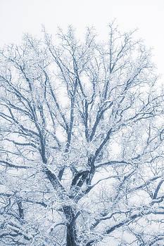lonely Oak tree in snowy, misty landscape by Christian Lagereek