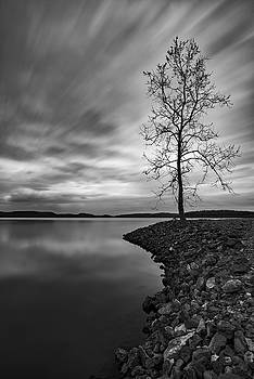 Lonely Tree by Joe Sparks