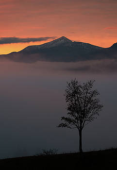 Lonely tree on background of sunrise in mountains by Sergey Ryzhkov