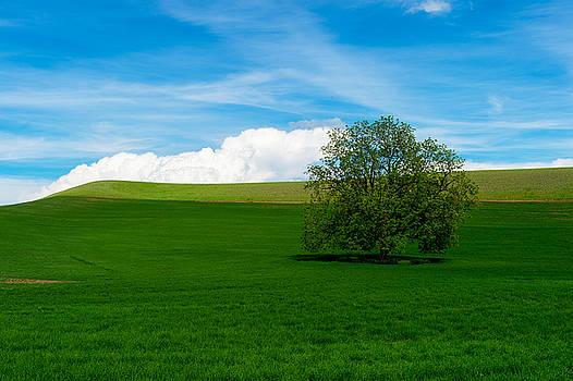 Lonely Tree - Palouse by Hisao Mogi