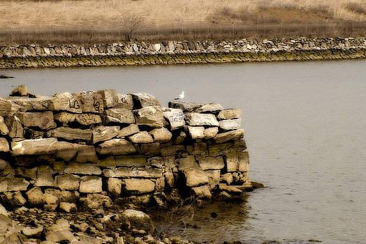 Lonesome Gull by Pat Carosone