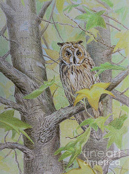 Long Eared Owl by Elaine Jones