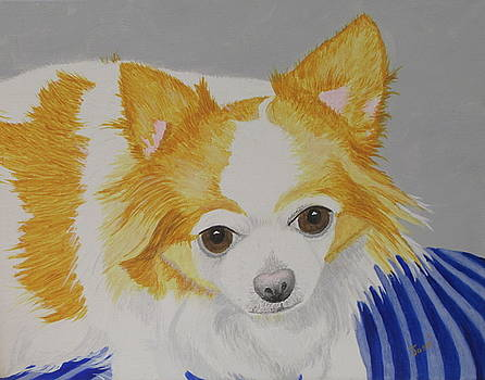 Long-haired Chihuahua by Hilda and Jose Garrancho