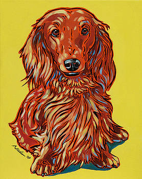 Long Haired Dachshund by Nadi Spencer